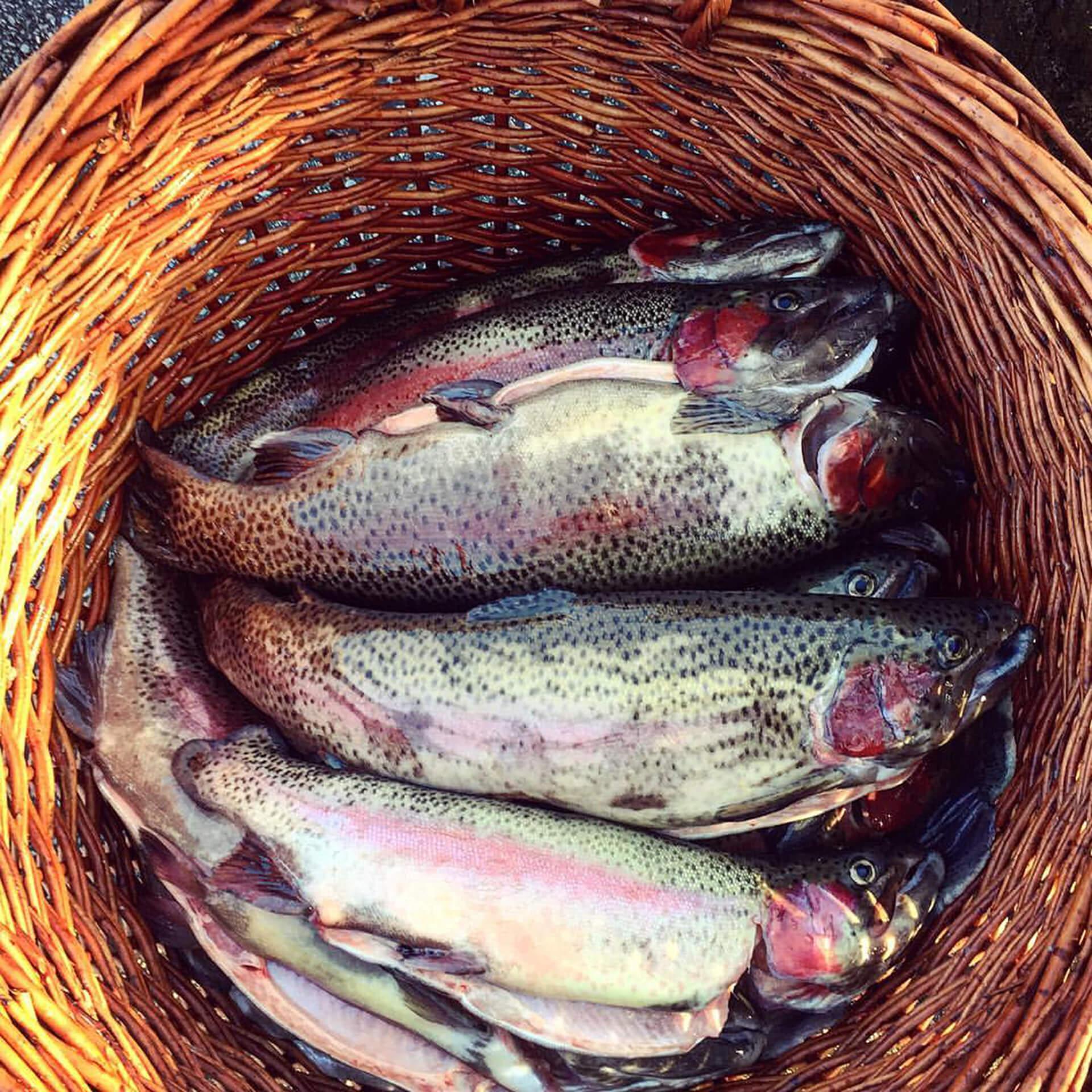 Ribnjak-farma-riba-(2)